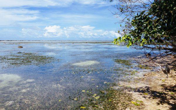 водата изчезва в Тихия Океан
